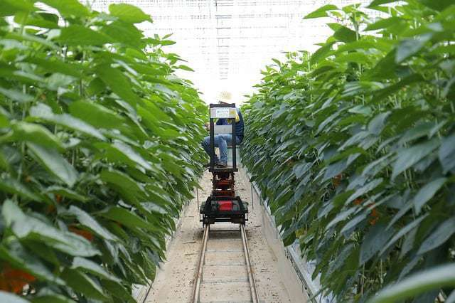 Smart farming using IoT applications